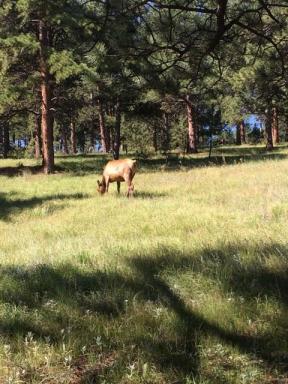Elk Meadow Fun Run 2017